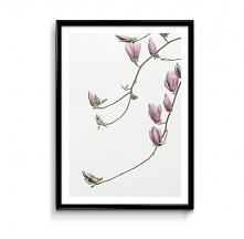 Magnolia - plakat