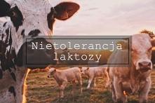 Nietolerancja laktozy- najważniejsze informacje