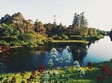 Jezioro, natura, drzewa i k...
