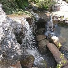 Ogród japoński 'Siruwi...