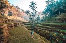 Indonezja, Tarasy ryżowe