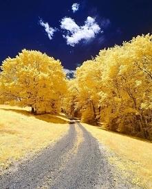 Yellow dream <3,  Andove...