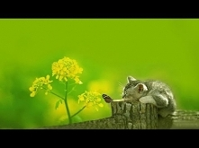 Relaxing Piano Music- Sleep Music, Relaxing Music, Soft Sleeping Music, Fall ...