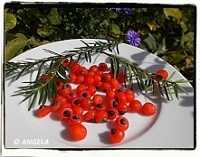 Owoce cisu - European Yew Tree Fruit Recipe - Gli arilli del tasso