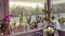 Kwiaty do kuchni: jakie gat...