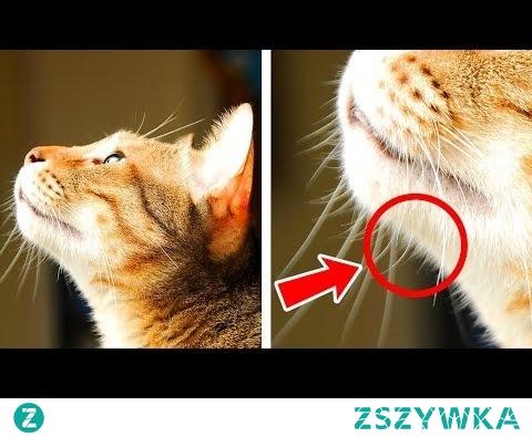 40 ciekawostek o kotach, które sprawią, że pokochasz je jeszcze bardziej