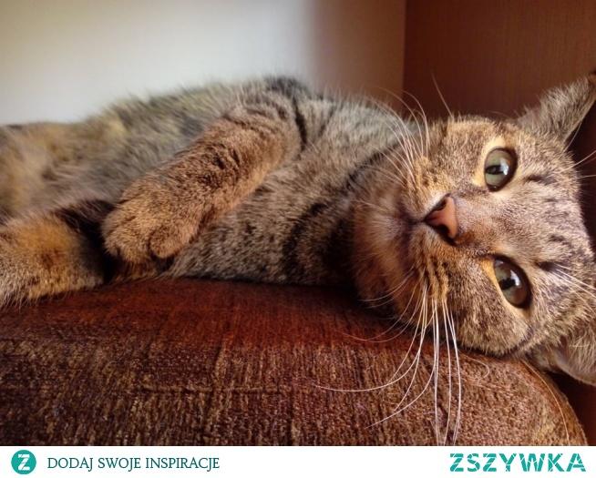 przywiązanie kota do człowieka - kocie historie (klik) :)