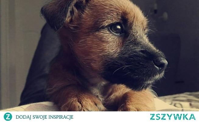 MY DOG - SWEETIE