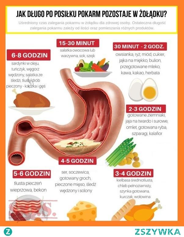 Jak długo pokarm pozostaje w żołądku?