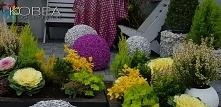 Jesienne dekoracje ozdoby do ogrodu Kobea Ogrody i Bruki Ewa Tyrna