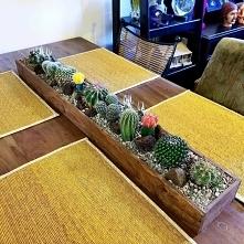 Kaktusikowo*