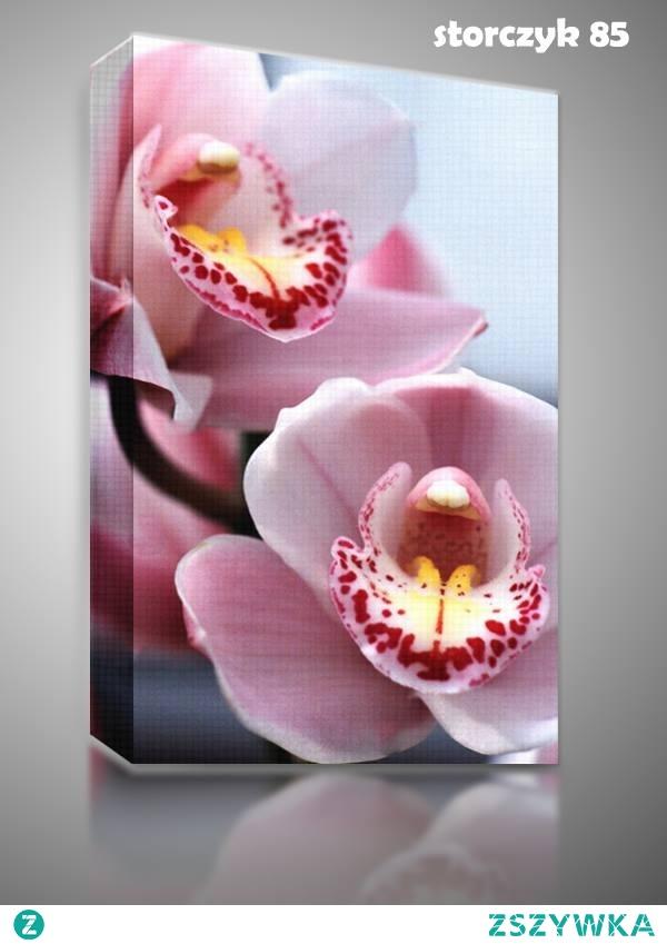 Podaruj swojemu Nauczycielowi wyjątkowy kwiat jakim jest #storczyk.