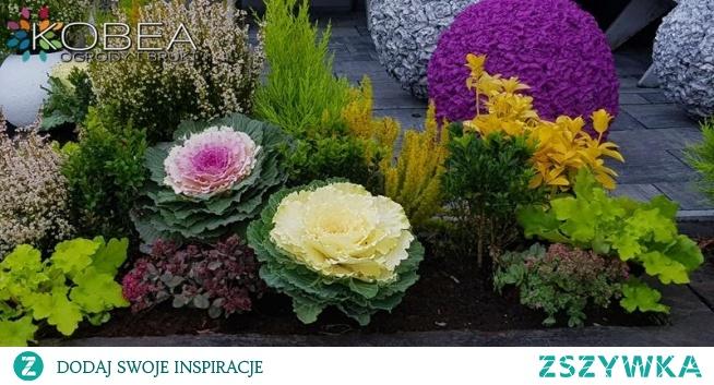 Dekoracje i ozdoby do ogrodu-Kobea Ogrody i Bruki