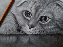 Kotek, ołówki ;)  IG: justy...