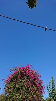 Patrzę w niebo i dzisiaj je...