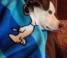 Snoopy i sobota.
