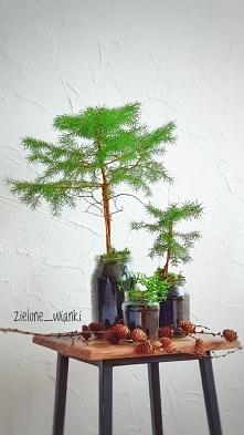 las w słoiku