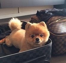 Kuleczka pakuje walizki :D