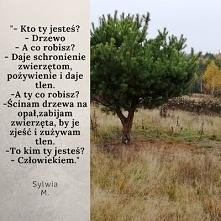 Samotne drzewo, poetycko.
