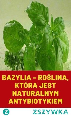 Bazylia – roślina, która jest naturalnym antybiotykiem