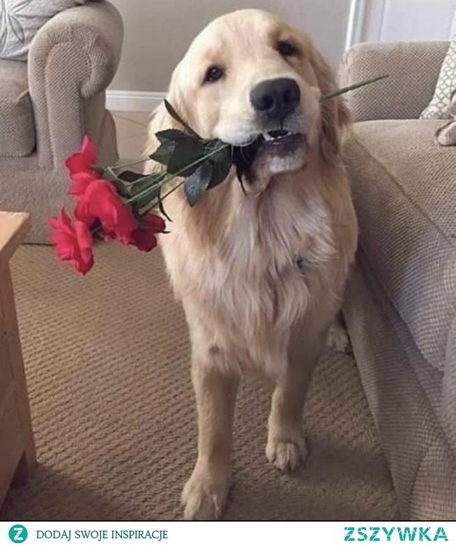 Dżentelmen ❤️