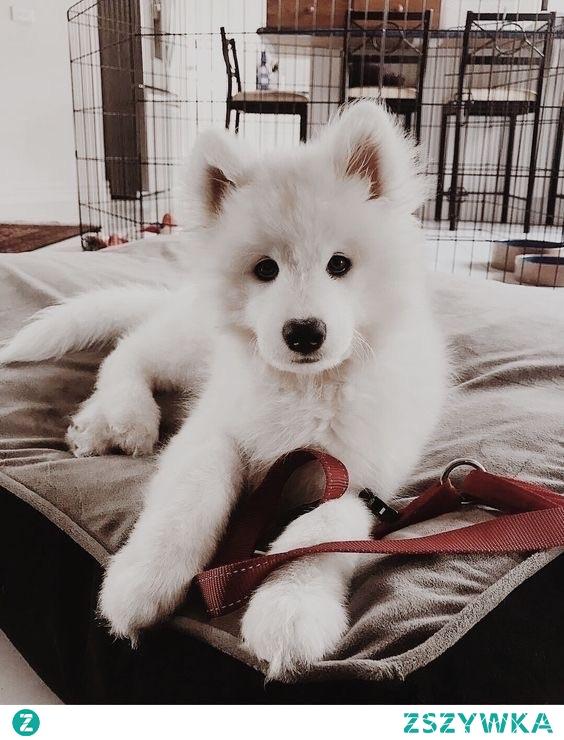 Cutie ^.^