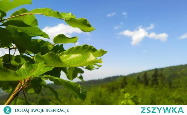 Nienaturalna zieleń, ale prawdziwa :)