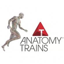 Anatomy trains - kursy na movuto.pl