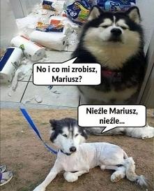 #mem #memy #śmieszne