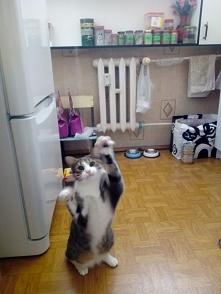 czy warto uczyć kota wykony...