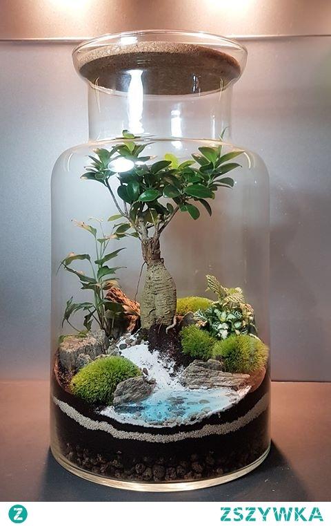 Las w słoju :D
