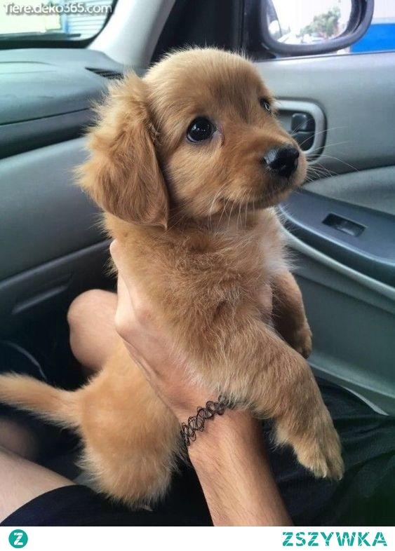 Czy ktoś mógłby mi powiedzieć, czy kupno psiaka jest złym wyborem przy trybie życia taki jak np mieszkanie na wynajem ? chciałabym szczerą odpowiedź, bez chamskich komentarzy, bo wiem że ludzie lubią czasem uprzykrzać życie.