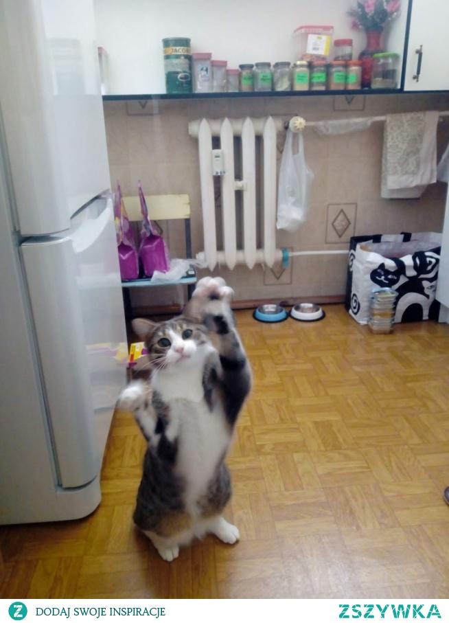 czy warto uczyć kota wykonywania poleceń? (klik)