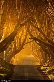 irlandia-polnocna-bez-photoshopa