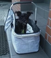 Koszykowy pies :)