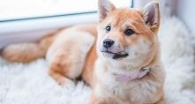 10 zasad dla właścicieli psów