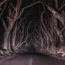 Dark Hedges - najmroczniejs...