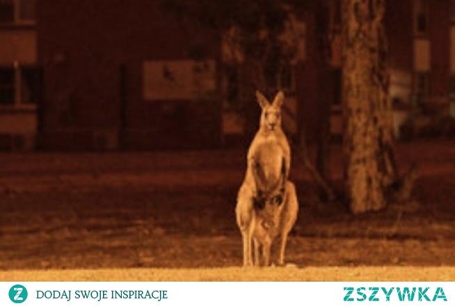 Australia i zwierzęta płoną ;((((