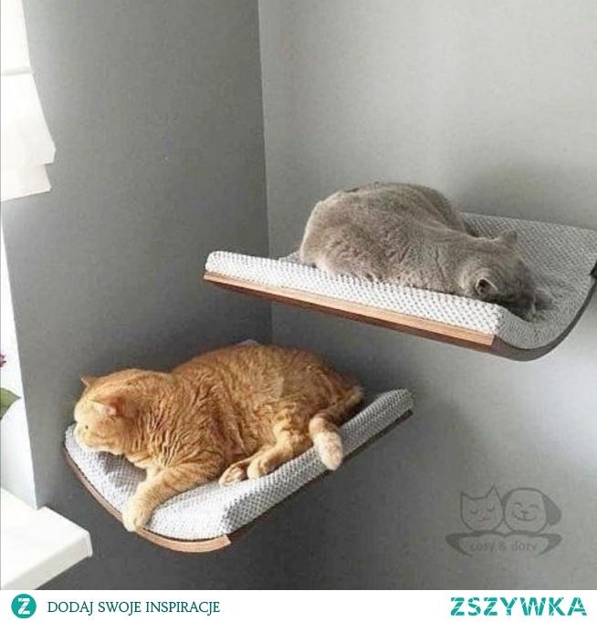 #koty #dlakota