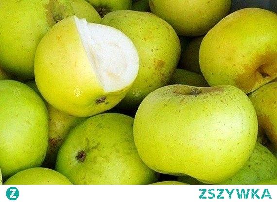 JABŁOŃ KOSZTELA MALUS DOMESTICA Kosztela rośnie dość szybko, osiągając dosyć okazałe rozmiary. Plony są zmienne, czasem bardzo obfite. Obradza w jabłka zazwyczaj co dwa lata. Owoce gotowe do zbioru pod koniec września. Bardzo odporna na mrozy i wszelkiego rodzaju choroby.