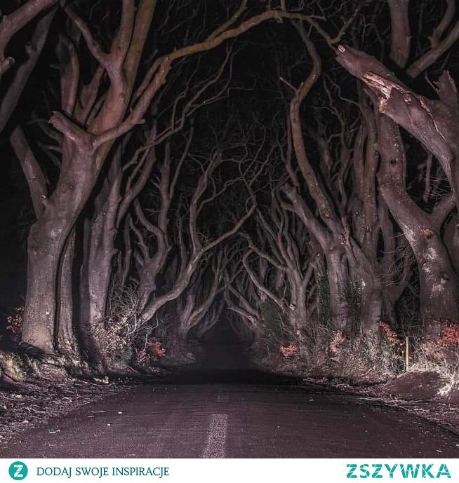 Dark Hedges - najmroczniejsza droga, Irlandia