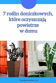 7 roślin doniczkowych, które oczyszczają  powietrze w domu
