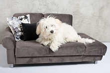 sofa, legowisko dla psa, kota wykonana z najwyższej jakości materiałów, pięknie się prezentuje w każdym wnętrzu
