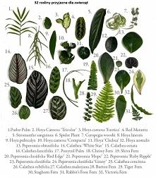 32 rośliny do domu które są...