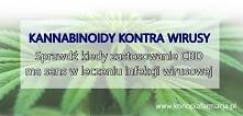 Kannabinoidy mogą działać p...