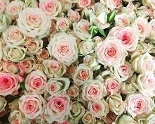 #roses #roses