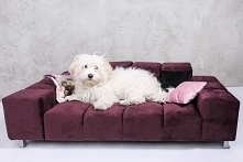 Minisofa Wilson S dla średnich i duzych psów elegackie legowsiko
