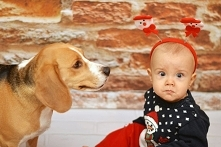 Beagle mój najlepszy przyjaciel. Chyba nie muszę nikogo przekonywać, że pies ...