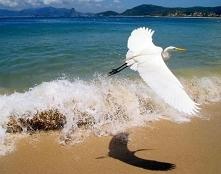 Nadzieja po to daje nam skrzydła, by życie i rozczarowanie miało co podcinać ~ Agnieszka Lisak.
