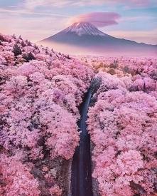 Wiosna w Japonii